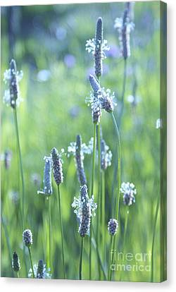 Summer Charm Canvas Print