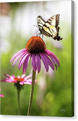 Tiger Swallowtail Canvas Print - Summer Colors by Everet Regal