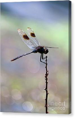Summer Dragonfly With Sparkling Pond Canvas Print
