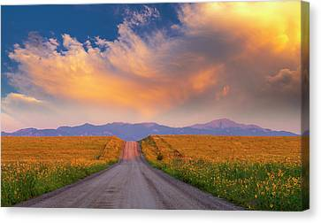 Canvas Print featuring the photograph Summer Fantastic by Tim Reaves