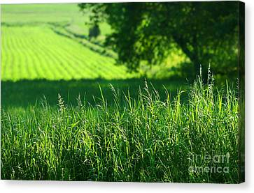 Summer Fields Of Green Canvas Print by Sandra Cunningham