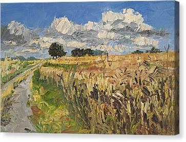 Summer Fields Plein Air Landscape Canvas Print by Martin Stankewitz