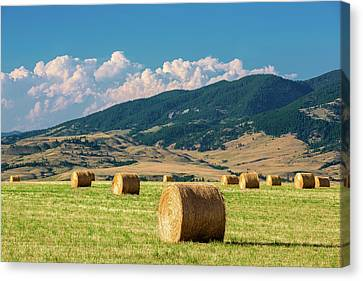 Summer Fields Canvas Print by Todd Klassy
