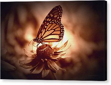 Invertebrates Canvas Print - Summer Floral With Monarch Butterfly 01 by Thomas Woolworth