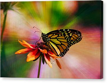 Invertebrates Canvas Print - Summer Floral With Monarch Butterfly 03 Prism by Thomas Woolworth