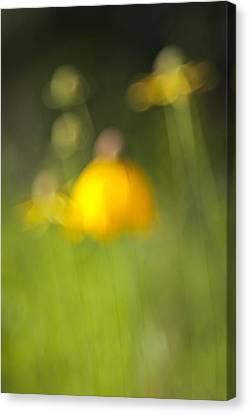 Summer Flowers Canvas Print by David Wynia
