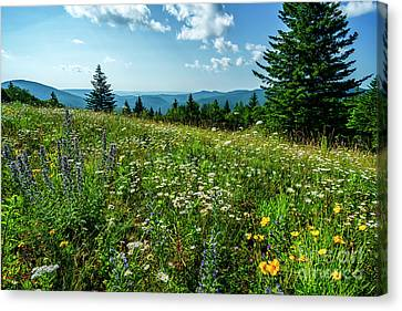 Summer Flowers In The Highlands Canvas Print