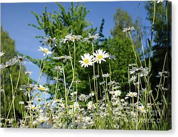 Canvas Print featuring the photograph Summer Flowers by Kennerth and Birgitta Kullman