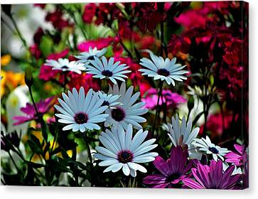 Summer Flowers Canvas Print by Robert Meanor