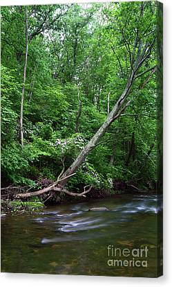 Summer Foliage Along The Patapsco River Maryland Canvas Print