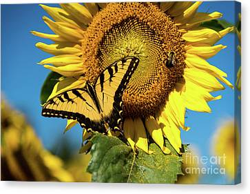 Summer Friends Canvas Print by Sandy Molinaro