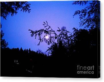 Summer Full Moon Canvas Print by Garnett  Jaeger