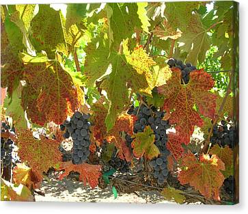 Summer Grapes Canvas Print