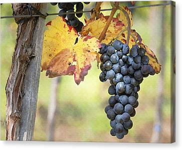 Summer Grapes Canvas Print by Sharon Foster