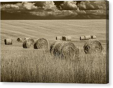 Summer Harvest Field With Hay Bales In Sepia Canvas Print