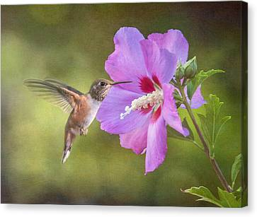 Summer Humming Canvas Print by Angie Vogel