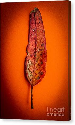 Summer In Decay Canvas Print