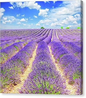Summer In Provence Canvas Print by Anastasy Yarmolovich