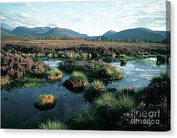 Summer In The Cairngorms Canvas Print by Phil Banks