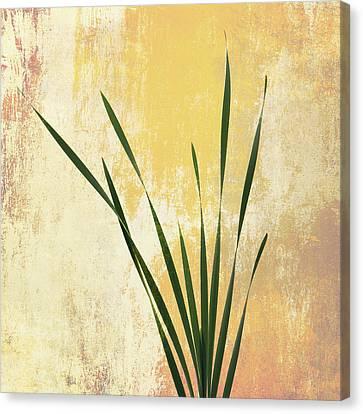 Canvas Print featuring the photograph Summer Is Short 1 by Ari Salmela