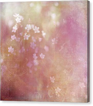 Summer Light Canvas Print by Margaret Goodwin