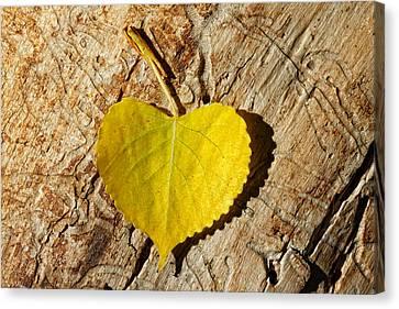 Summer Love Heart Shaped Leaf Canvas Print