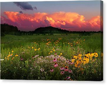 Summer Majesty Canvas Print by Rob Blair