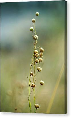 Pods Canvas Print - Summer Meadow by Nailia Schwarz