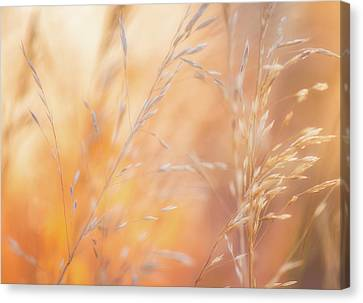 Darren Canvas Print - Summer Mornings by Darren White