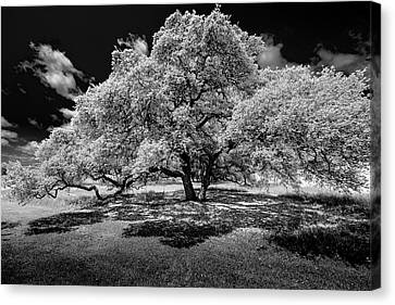 Canvas Print featuring the photograph A Summer's Night by Darryl Dalton