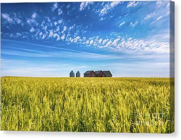 Summer On The Prairies Canvas Print by Ian McGregor