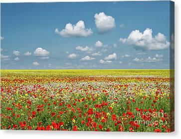 Summer Palette Canvas Print
