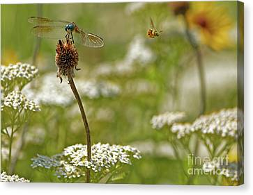 Canvas Print - Summer Pollinators by Natural Focal Point Photography