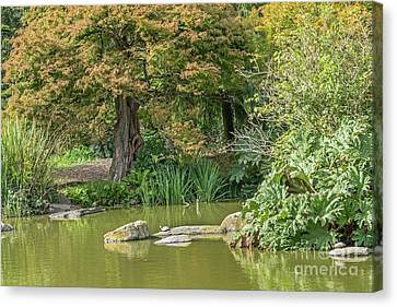 Summer Pond Canvas Print by Kate Brown