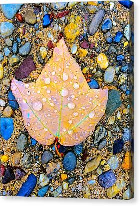 Summer Rain Leaf Canvas Print