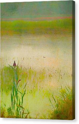 Summer Reeds Canvas Print by Catherine Alfidi