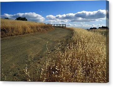 Summer Road Canvas Print by Kathy Yates