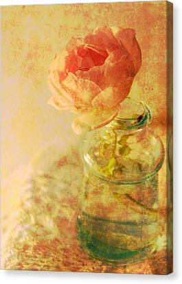 Summer Rose Canvas Print by Catherine Alfidi