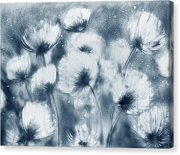 Summer Snow Canvas Print by Elena Vedernikova