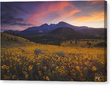Northern Arizona Canvas Print - Summer Splendor by Peter Coskun