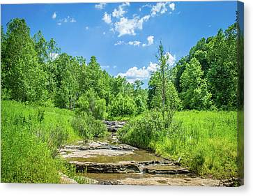 Summer Stream Canvas Print by Brent Tindall