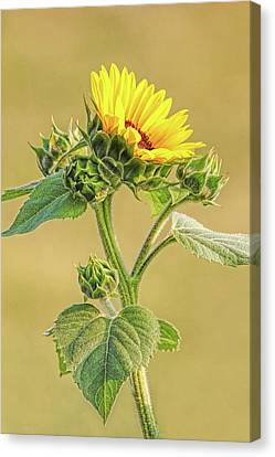 Canvas Print featuring the photograph Summer Sunflower Floral by Jennie Marie Schell