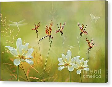 Summer Symphony Canvas Print by Bonnie Barry