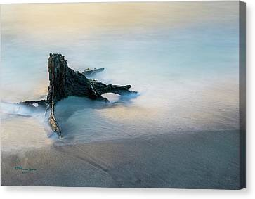 Driftwood Canvas Print - Summer Tide by Marvin Spates