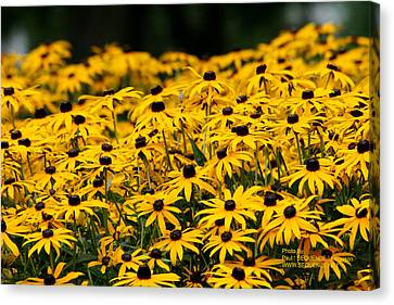 Canvas Print - Summer Time Is Here by Paul SEQUENCE Ferguson             sequence dot net