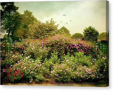 Summer Trellis  Canvas Print by Jessica Jenney