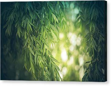 Beyond The Willow Leaves Canvas Print by Debi Bishop