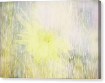 Summer Whisper Canvas Print by Ann Powell