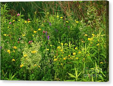 Canvas Print featuring the photograph Summer Wildflowers by Smilin Eyes  Treasures
