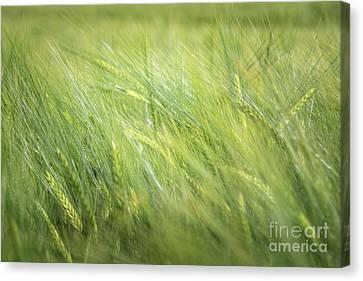 Summergreen Canvas Print
